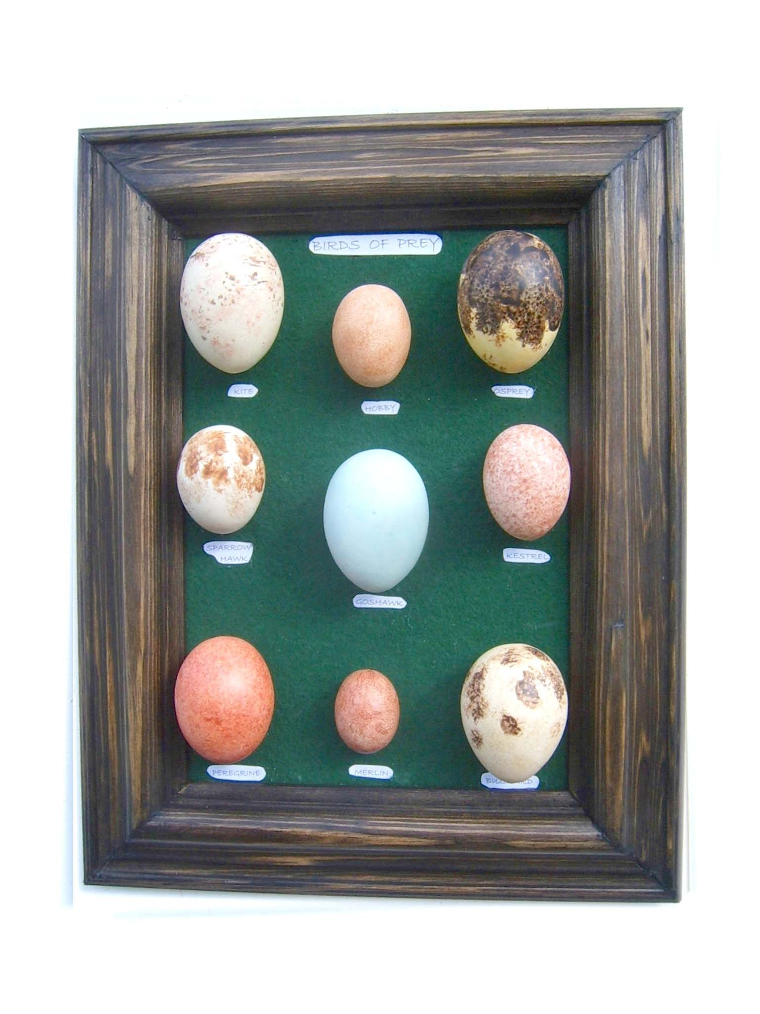 Our replica birds eggs products for Egg sessel replica